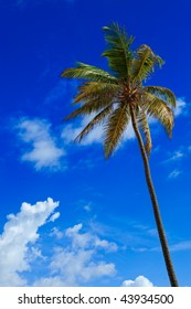 Palm tree against the blue skies of the Caribbean