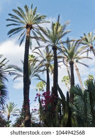 Palm tree against blue sky at Majorelle garden in Marrakech, Morocco, Africa