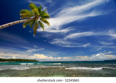 Palm tree against blue sky and sea on island beach
