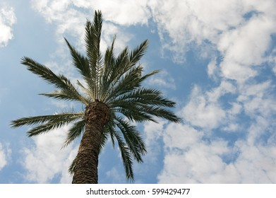 palm tree against cloudy sky