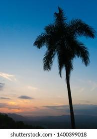 Palm tree against mountain range at sunset