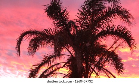 Palm tree against vivid colorful sunset with copy space.