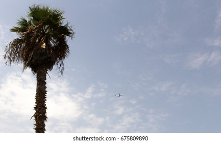 Palm tree, airplane on the background