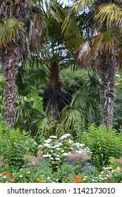 Palm tree background in garden
