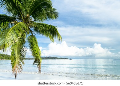 a palm tree in the beach