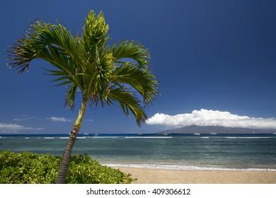 Palm tree and beach with the island of Lanai. Lahaina, Maui, Hawaii