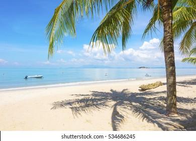 Palm tree at beach in Penang, Malaysia