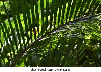 A palm tree bearing spines in the Tabaquite forest in Trinidad and Tobago.