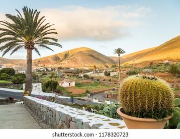 Palm tree in Betancuria in Fuerteventura, Canary Islands, Spain.