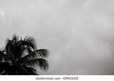 A palm tree blowing in the wind against a moody clouds.