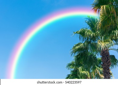 Palm tree and blue with rainbow
