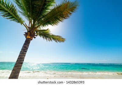 Palm tree and blue sea in Raisins Clairs beach in Guadeloupe, French west indies. Lesser Antilles, Caribbean sea