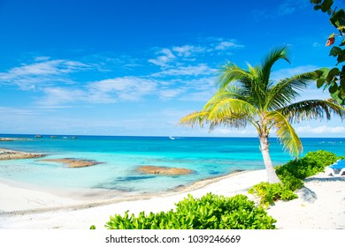 Palm tree, blue sea, sky in Great Stirrup Cay, Bahamas. Tropical beach with white sand and turquoise water. Summer vacation, recreation, relax. Paradise, peace, romance. Travel, traveling, wanderlust