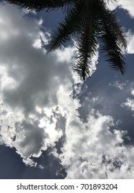 Palm tree, blue skies, and clouds