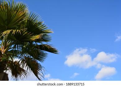 palm tree and a blue sky