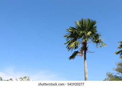 Palm tree and blue sky background in summer season