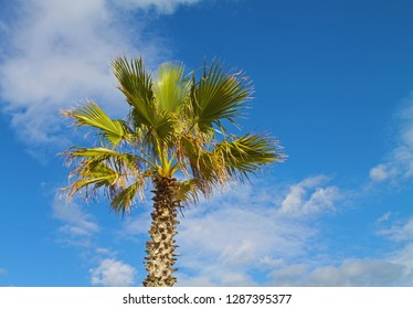 Palm tree and blue sky in Tunis