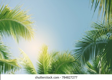 Palm tree with blue sky,retro and vintage tone.