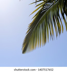 Palm tree branches and blue sky from below. Photographed in a paradise island called Madeira. In this photo you can see multiple palm leaves and cloudless clear sky. Perfect view!
