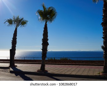 Palm tree by the Mediterranean Sea coast beach with clear blue water Costa Blanca Spain
