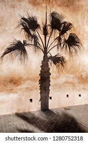A palm tree casts a dark shadow on the exterior fortress wall of the Kasbah of the Udayas in Rabat, Morocco.