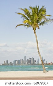 Palm tree and the city of  Miami Florida seen from the beach