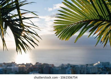 Palm tree. City and the ocean on the background. Tenerife