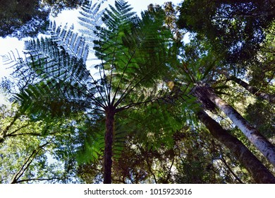 Palm tree with a clear blue sky in Bunya National Park, Queensland, Australia.