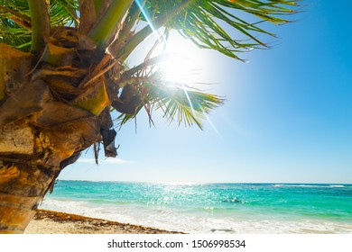 Palm tree and clear water in Raisins Clairs beach in Guadeloupe, French west indies. Lesser Antilles, Caribbean sea