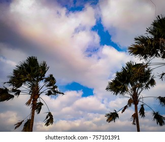 Palm tree with cloudy sky background panorama