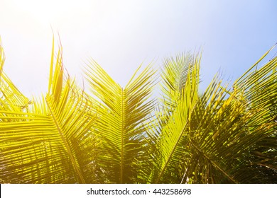 Palm tree with coconut on blue sky and orange lighting effect