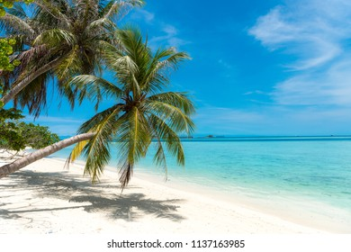 Palm tree coconut tree on white sand beach in Maldives tropical paradise island, most beautiful beach in the world