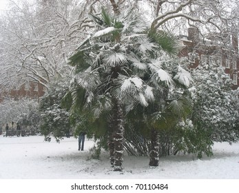 Palm tree covered in snow