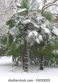 Palm tree covered in snow in Soho Square, London
