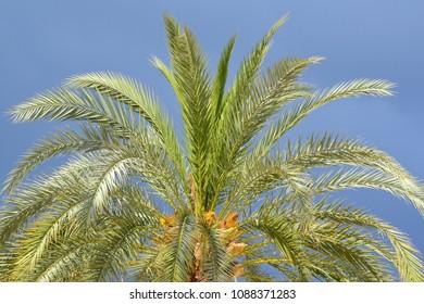palm tree cron on dark blue sky