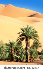 palm tree in the desert with sand dunes and blue sky