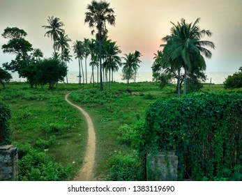 Palm Tree and dirt path with Ray light in early morning with soft focus filter effect