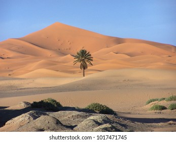Palm Tree With Dune in the Desert