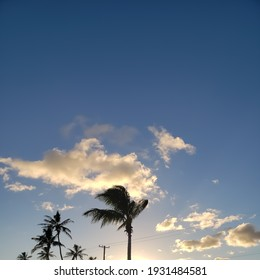 Palm tree during Hawaiian Sunset