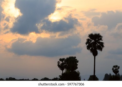 the palm tree in farm