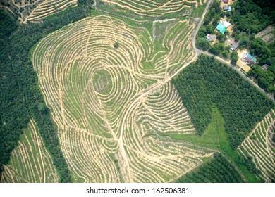 palm tree farm vertical view