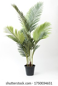 palm tree , fern green vase in black pot without shadow on white background - Shutterstock ID 1750034651