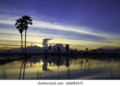 the palm tree in the field in sunset