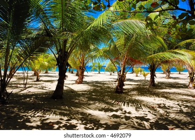 Palm tree forest. One of the amazing views at Guajataca Beach in the town of Quebradillas, Puerto Rico.