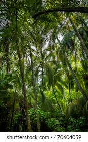 Palm Tree Forest - Tayrona Natural National Park, Colombia