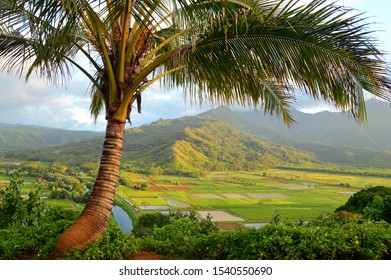 Hawaiian Landscape Images Stock Photos Vectors Shutterstock