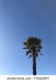 Palm Tree in French Brittany