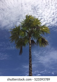 A palm tree in French Polynesia on a beautiful day.