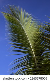 A palm tree frond against a sunny blue sky