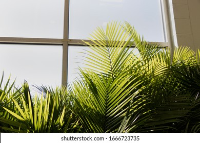 Palm tree fronds in front of a sunny window. House plants